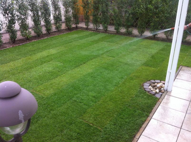 Rollrasen Fertigrasen Rasen Raseneinsaat Rasenneuanlage